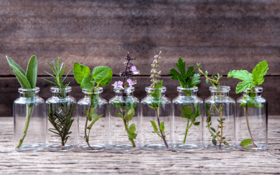 De kracht van homeopathie en alternatieve geneeswijzen