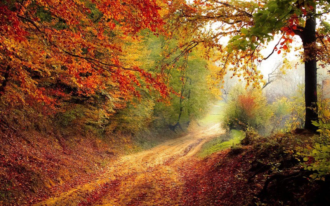 Hoe kom je fit de herfst door?